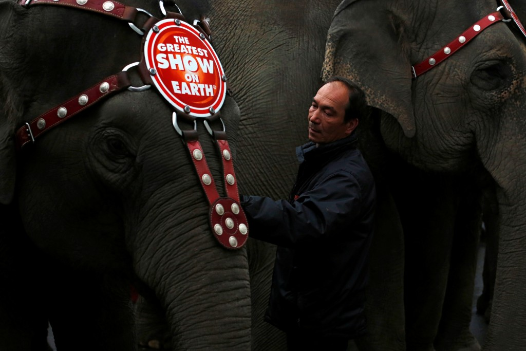 "Senior Elephant Handler Alex Petrov prepares an elephant for a performance at Ringling Bros and Barnum & Bailey Circus'          ""Circus Extreme"" show at the Mohegan Sun Arena at Casey Plaza in Wilkes-Barre, Pennsylvania, U.S., April 29, 2016.          Photo by Andrew Kelly/Reuters"