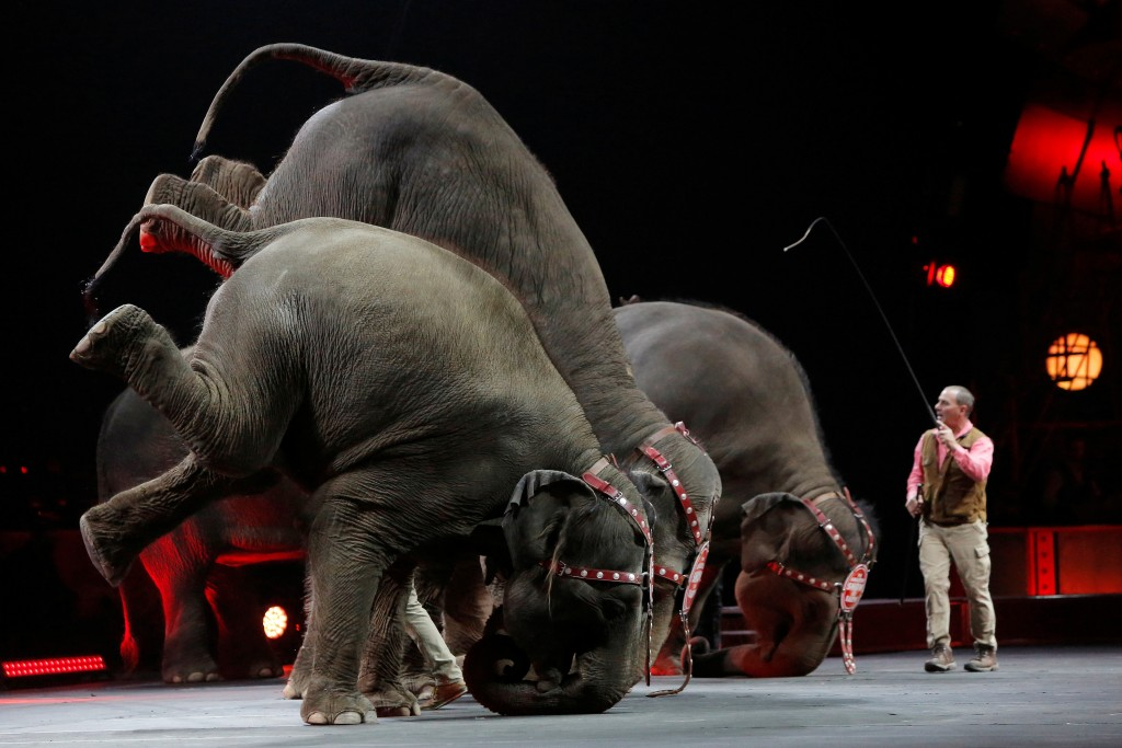 "Elephants perform during Ringling Bros and Barnum & Bailey Circus' ""Circus Extreme"" show at the Mohegan          Sun Arena at Casey Plaza in Wilkes-Barre, Pennsylvania, The elephants will perform in the circus for the last time on Sunday          before the company ends the practice.  Photo by Andrew Kelly/Reuters"
