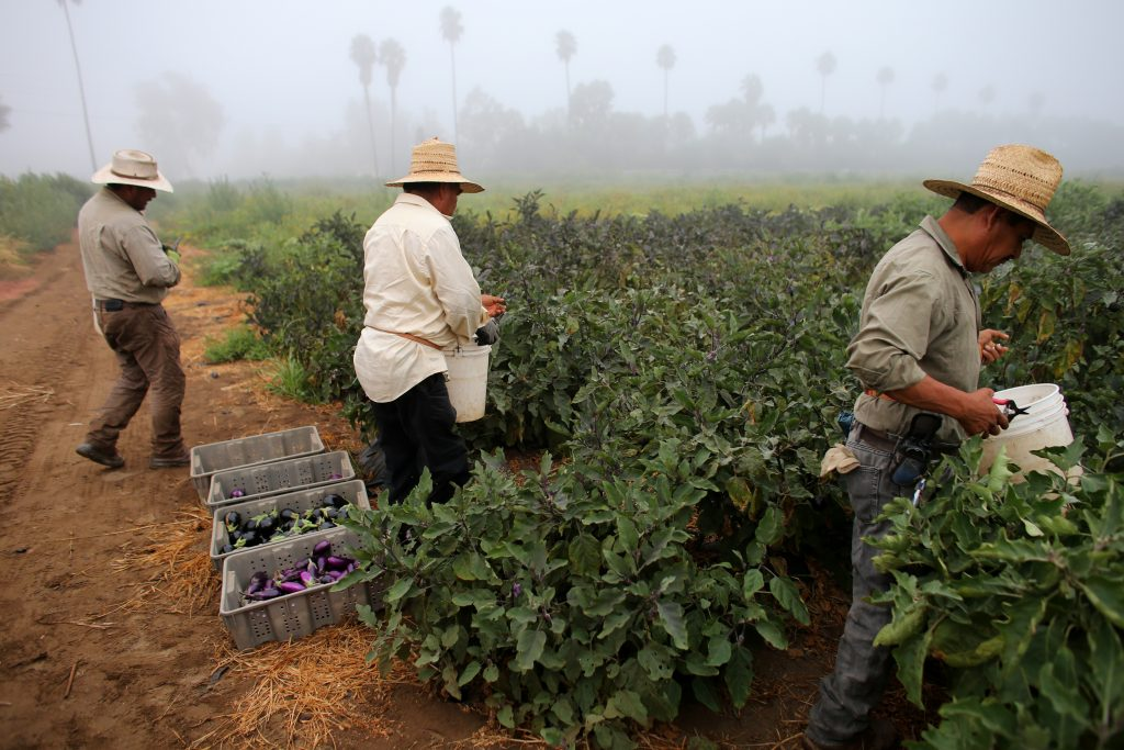 When labor laws left farm workers behind — and vulnerable to abuse | PBS  NewsHour Weekend