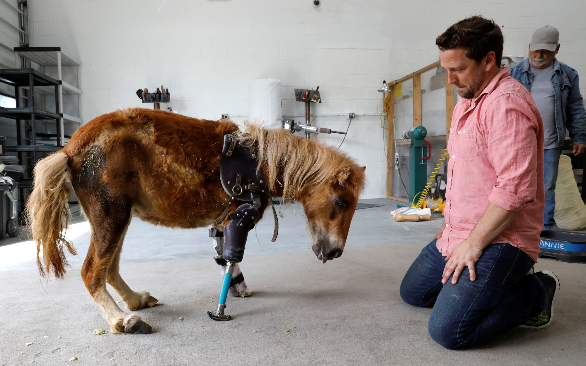 Brace yourself this prosthetic engineer is giving animals a leg up derrick campana kneels beside angel marie a three legged mini horse who wears a solutioingenieria Images