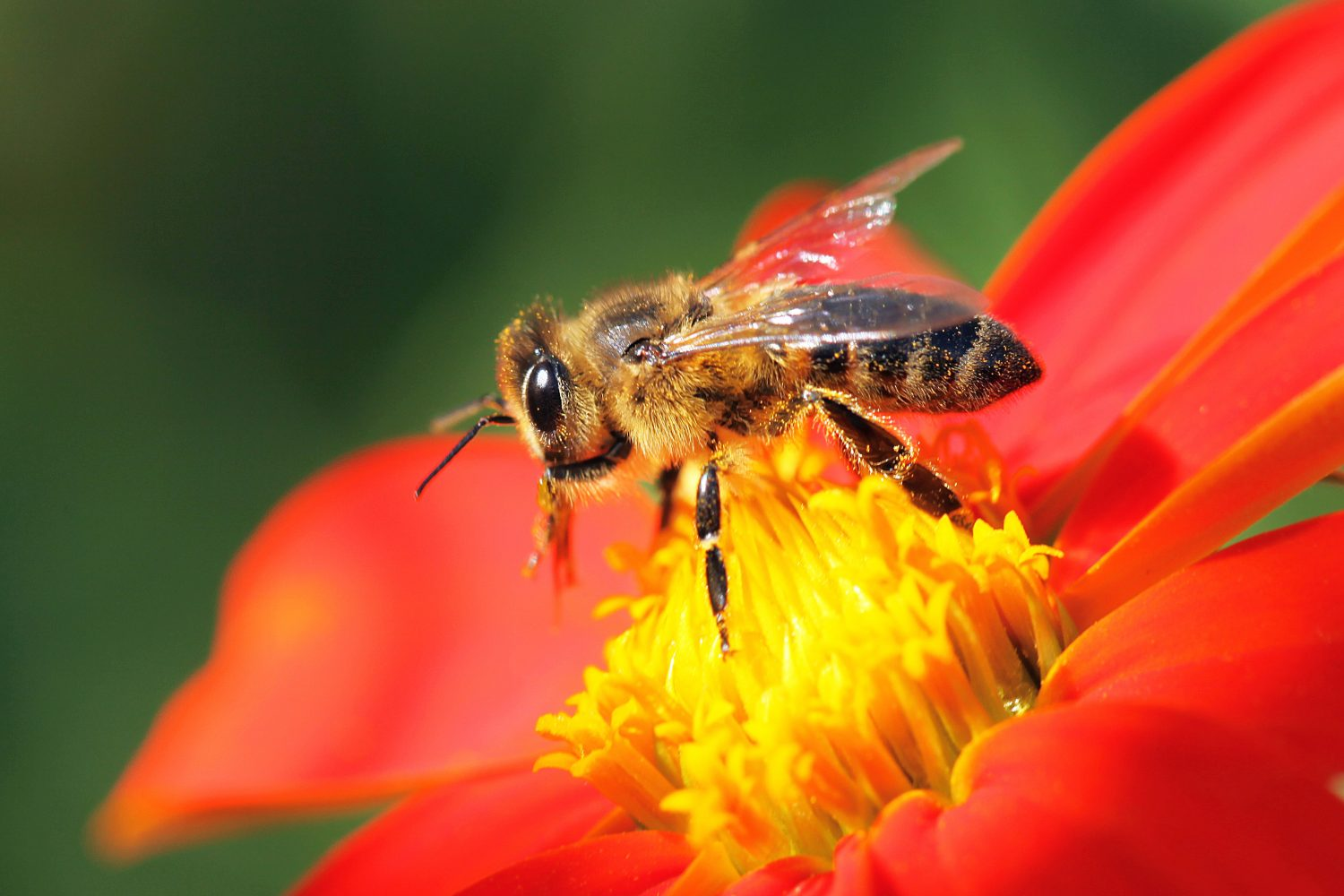 Neonicotinoid pesticides are slowly killing bees | PBS NewsHour