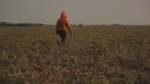 Three Plans to Stop Rape in the Fields