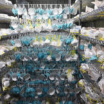 INTERACTIVE: A Closer Look at Key COVID-19 Supplies