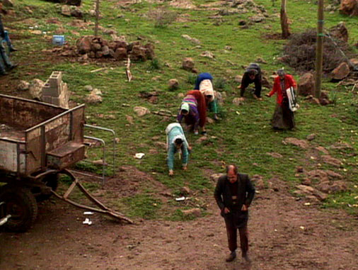 the family that walks on all fours essay The grizon ulas family is a kurdish family of 19 from rural southern turkey, five (except for another, who had died) of whom walk on all fours with their feet and the palms of their hands in what is called a bear crawl their quadrupedal gait has never been reported in anatomically intact adult humans.