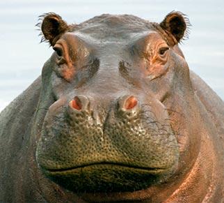 NOVA - Official Website | Gigantism & Dwarfism on Islands  Gigantism In Animals