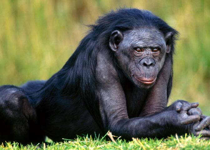 social behavior among monkeys more nature An unusual experiment has demonstrated the importance of nature over nurture in behavior young monkeys reared by a mother other than their own are more likely to.
