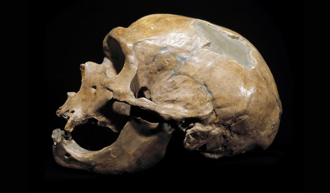 Neanderthal La Chapelle Aux Saints Do Neanderthals belong within