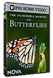 Journey of the Butterflies