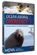 Ocean Animal Emergency