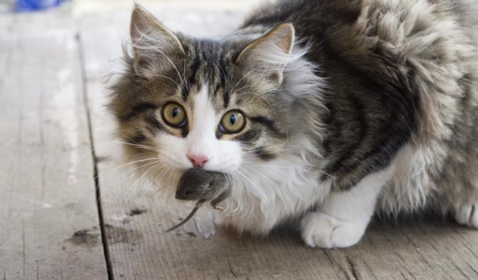nova official website cat astrophic parasite
