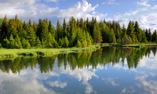 reflection of trees in mountain lake