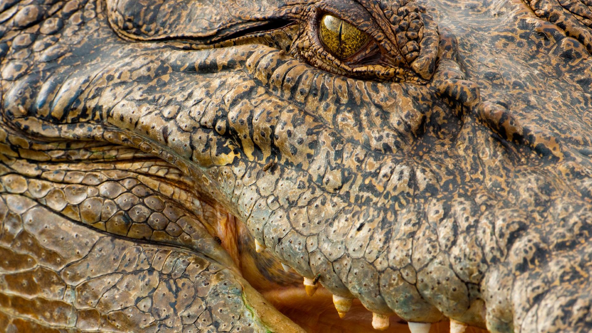 Nova Official Website Deadly Crocodiles Down Under