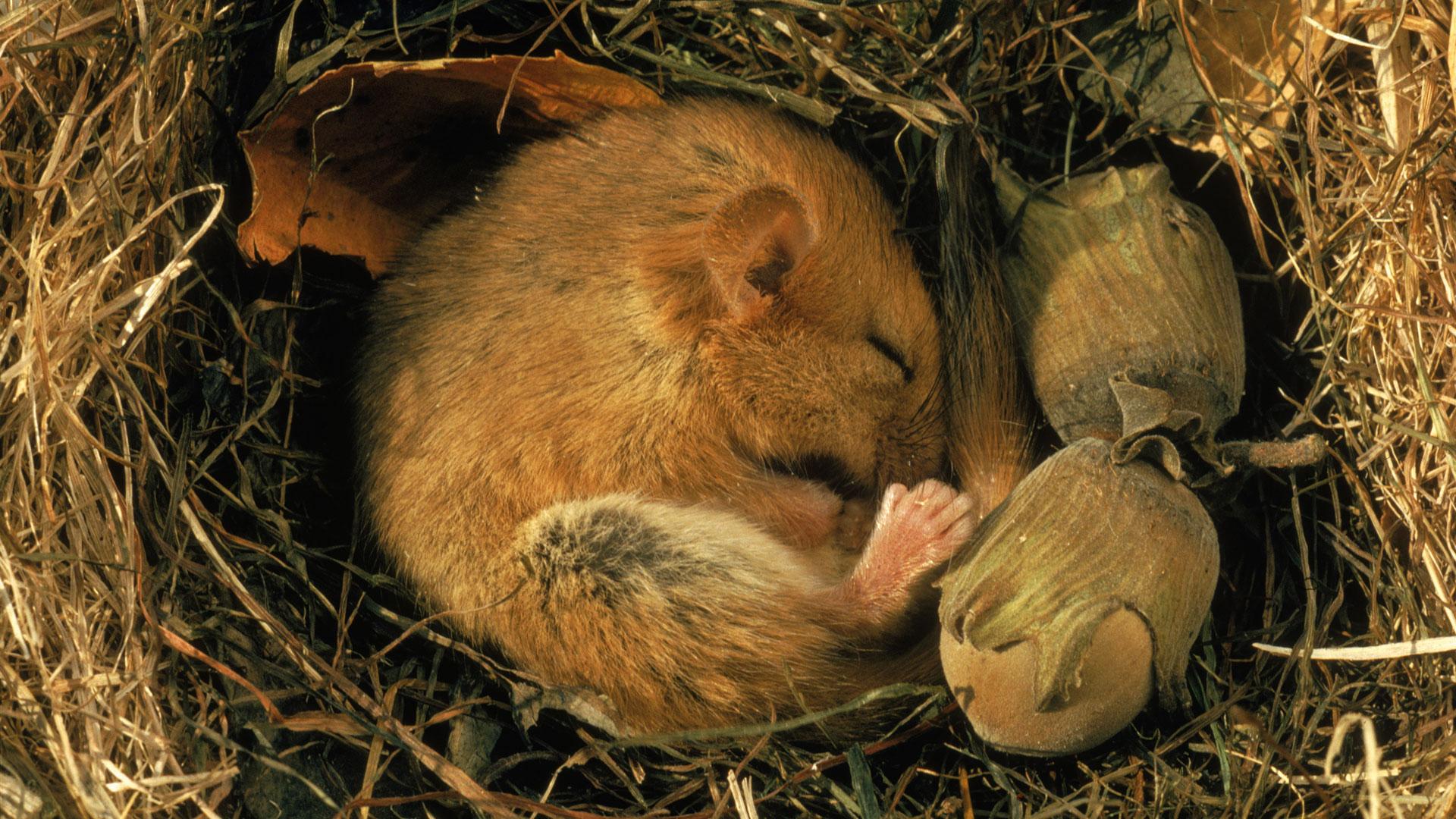 nova   official website human hibernation