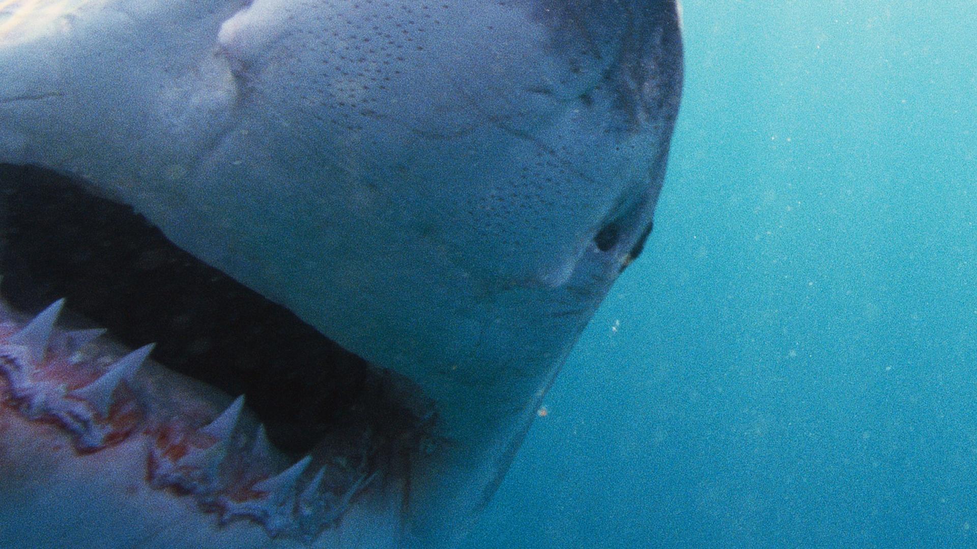 nova official website why sharks attack