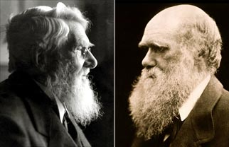Wallace & Darwin head shots