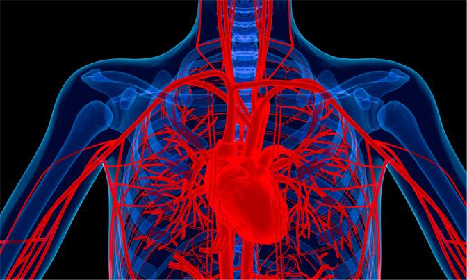 Nova Official Website Heart Disease Treatments