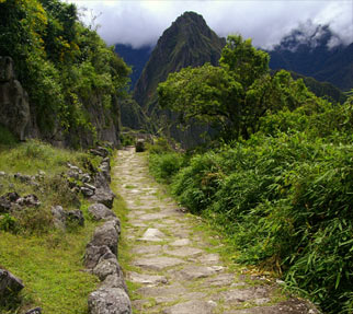 A tree lined road to the Incan city of Machu Picchu.