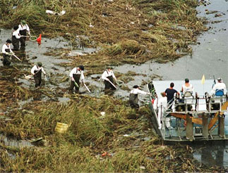 Recovery workers searching a swamp