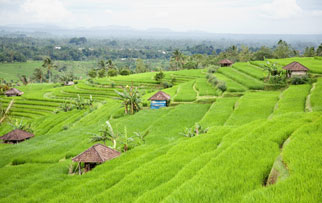 rice fields in Bali, Indonesia
