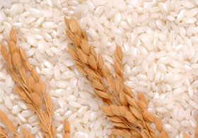dried rice plant and rice grains
