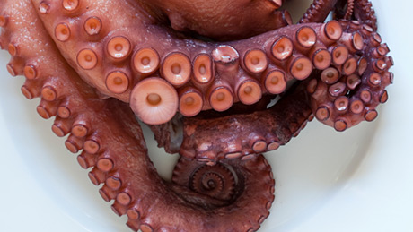 NOVA | How Smart Is An Octopus?