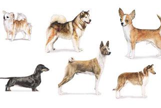 NOVA - Official Website | Dogs Around the World