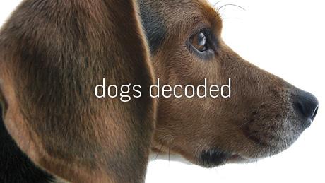 NOVA - Official Website | Dogs Decoded