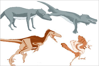 Similarities between Birds and Dinosaurs a Story of Evolution
