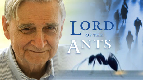 Poster for Lord of Ants program