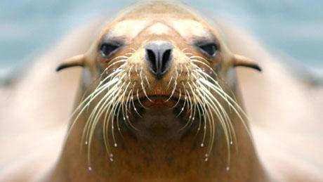 Marine mammals pictures - photo#9