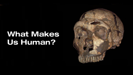 what makes us human culture How culture makes us human: primate social evolution and the formation of   what separates modern humans from our primate cousins—are we a mere.