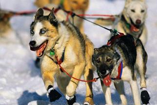 Nova Official Website Working Dogs