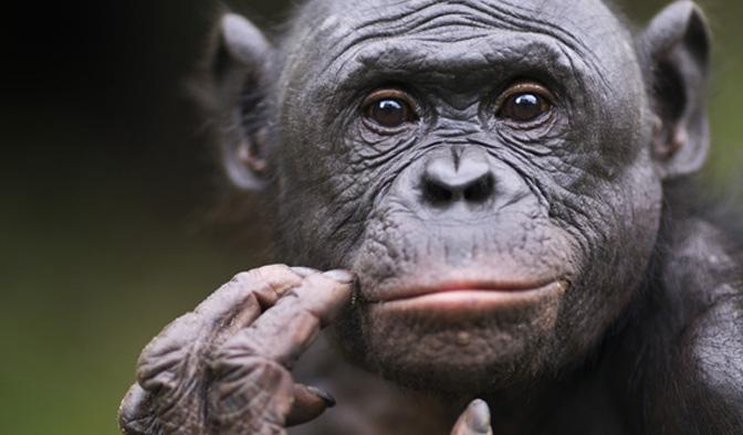 NOVA - Official Website | Social Skills: Kids vs. Apes