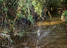 spider web over river