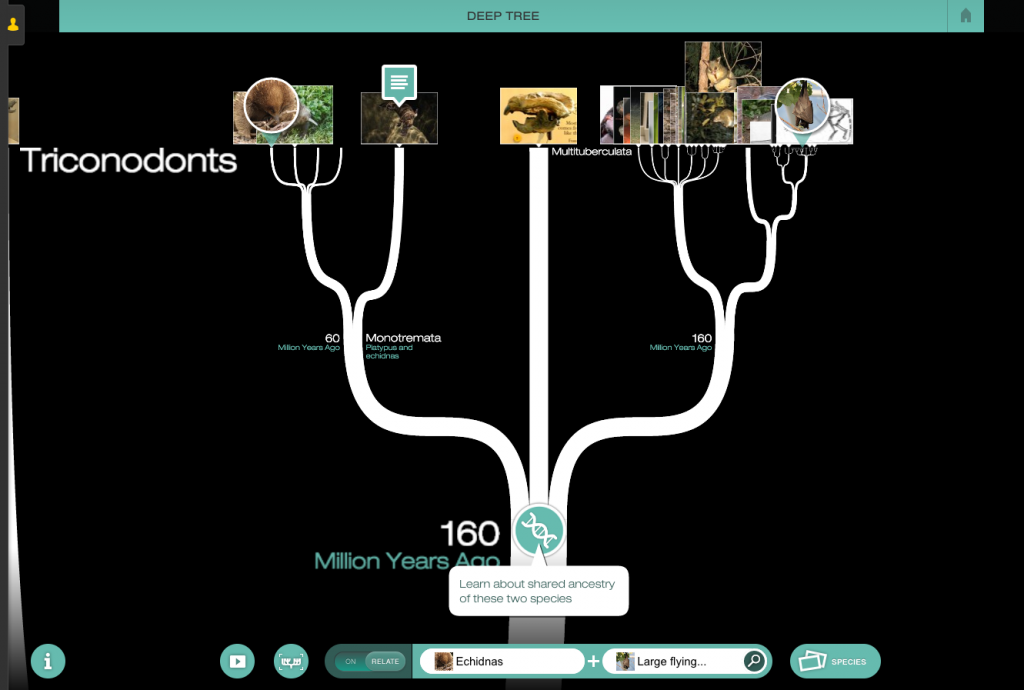 Trace the shared ancestry of over 70,000 species in Deep Tree.