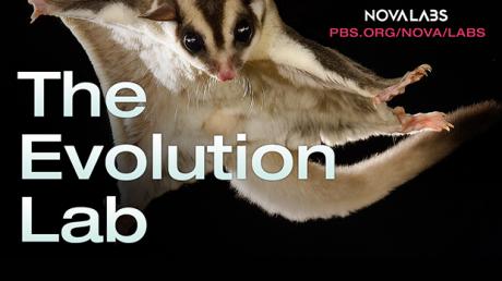 Explore the tree of life in NOVA's Evolution Lab