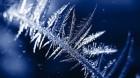 frozen_510
