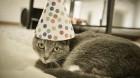 birthday_cat620