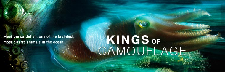 Kings of Camouflage: Meet the cuttlefish, one of the brainiest, most bizarre animals in the ocean.