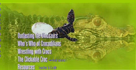 Crocodiles (see bottom of page for text navigation links)
