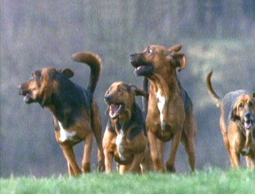 مواصفات اقتناء كلب Evol-grouprunningdogs-l