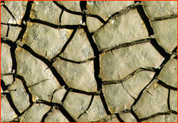 Drought-dried, cracked mud