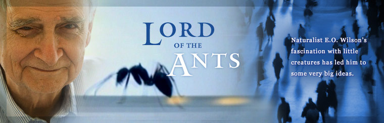 Lord of the Ants: Naturalist E.O. Wilson's fascination with little creatures has led him to some very big ideas. Airs on PBS May 20, 2008