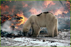 Polar bear at edge of fire