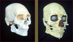 Kennewick man reconstruction