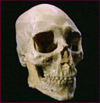 skull of Kennewick man