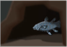 Coelacanth in cave