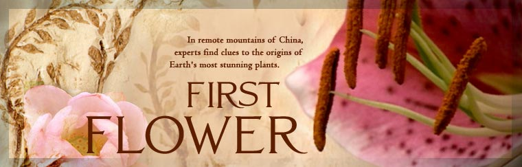 First Flower: In remote mountains of China, experts find clues to the origins of Earth's most stunning plants. Airs on PBS April 17, 2007