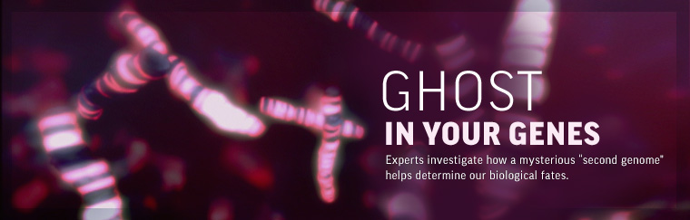 Ghost in Your Genes: Experts investigate how a mysterious 'second genome' helps determine our biological fates.