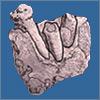 Ardipithecus ramidus, Ardipithecus kadabba